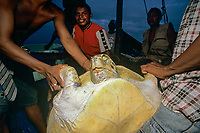 Miskito Indian fishermen showing off catch of endangered Green Turtle, Chelonia mydas, Puerto Cabezas, Nicaragua, Caribbean Sea