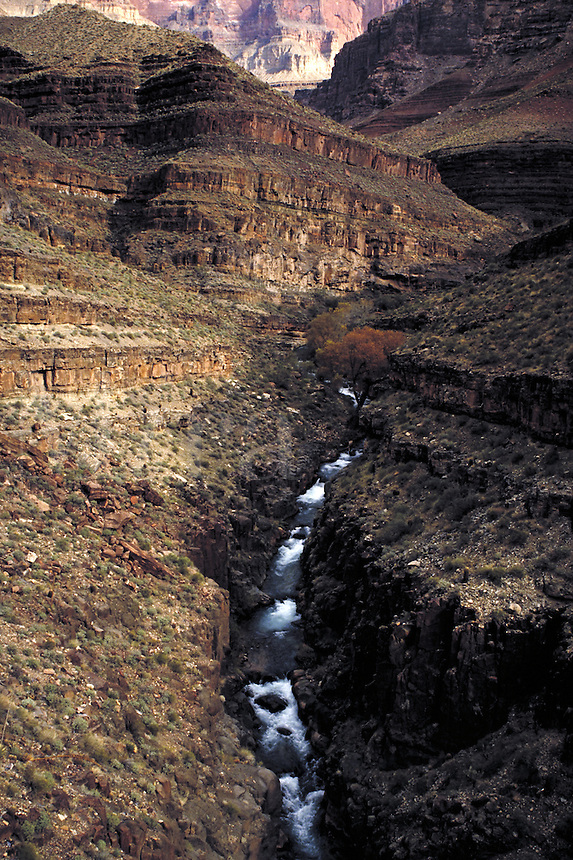 Cottonwood trees along Tapeats Creek. Arizona USA Grand Canyon National Park.