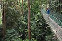 Tourist birdwatching on canopy walkway in tropical rainforest. Maliau Basin, Sabah, Borneo.