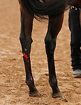 October 09 2015:   Ageless suffered a rear leg injury early on in the running of the Buffalo Trace Franklin COunty.   Ageless and jockey Julien Leparoux win the 19th running of The Buffalo Trace Franklin County (Listed) $100,000 for trainer Arnaud Delacour and owner Lael Stables, with Lady Shipman and jockey Eduardo Nunez finishing 2nd.  Candice Chavez/ESW/CSM