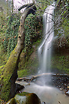 Pacific Northwest Waterfall near the Sandy River in Troutdale Oregon