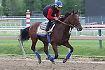 May 15, 2015: Kentucky Derby winner and Preakness contender American Pharoah gallops on the track Friday morning.Friday morning Preakness preparations at Pimlico Race Course in Baltimore, MD. Joan Fairman Kanes/ESW/CSM