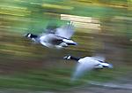 14_ANIMALS, BIRDS BY LOU JAWITZ