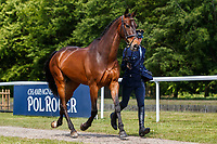GER-Jerome Robine rides MHS Clare Boy during the First Horse Inspection for the CCI-L2* Section D.  2019 GBR-Saracen Horse Feeds Houghton International Horse Trial. Wednesday 22 May. Copyright Photo: Libby Law Photography