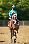 May 14, 2021: Army Wife #1, ridden by jockey Joel Rosario, wins the Black-Eyed Susan Stakes on Black-Eyed Susan Day at Pimlico Race Course in Baltimore, Maryland. Wendy Wooley/Eclipse Sportswire/CSM