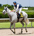 10 July 2010: Lord Robyn and Jockey Manuel Aguilar after the Bob Umphrey Turf Sprint Handicap at Calder Race Course in Miami Gardens, FL.