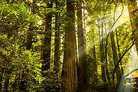 Redwood National & State Parks