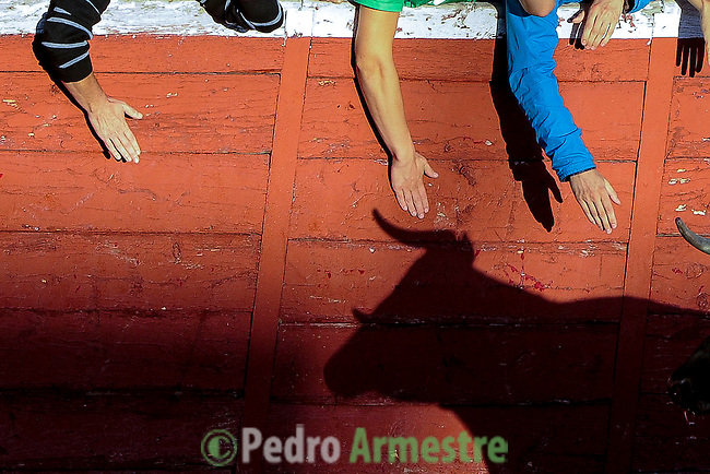 The shadow of a cow is casted on on a wall of the bullring of San Sebastian de los Reyes after a bull run festival, near Madrid, on august 28, 2014. © Pedro ARMESTRE