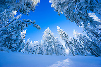 Snowy forest in the Lake Tahoe basin