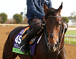 Lope Y Fernandez, trained by trainer Aidan P. O'Brien, exercises in preparation for the Breeders' Cup Mile at Keeneland Racetrack in Lexington, Kentucky on November 5, 2020.