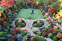 """28/10/11 ..Tony Newton, 62, is surrounded by a kaleidoscope of autumn colour in his garden in Walsall, West Midlands...The award-winning garden has been a labour-of-love for over twenty years for Tony and his wife Marie...Tony said: """"It's so unusual to have not had a frost by this time of year. Normally frosts can kill off autumn colour but we've been frost-free and the colours are stunning...""""The stakes are high at this time of year, you can get frost or even wind that rips the leaves off. But this year, to our surprise, the colours are better than ever - they've all come together...""""It's like herding a bunch of unruly kids - you can't always plan for when the leaves will all turn.""""..The suburban garden is planted with acers, azaleas, conifers, and other brightly coloured shrubs. """"We have colour in our garden all year round and have even renamed our house 'Four Seasons'.  The changing colours are like our autumn flowers"""" Tony added....All Rights Reserved - All Rights Reserved - F Stop Press  - T: +44 (0)1335 324700.Local copyright law applies to all print & online usage. Fees charged will comply with standard space rates and usage for that country, region or state."""