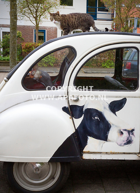 Nijmegen, 250415<br /> Kat, koe of eend? <br /> Op een met koeien beschilderde eend ligt een kat haar middagdutje te doen.<br /> Foto: Sjef Prins - APA Foto