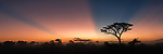 Amazing pre-sunrise dawn light in the African bush. Edge of the short grass plains near Ndutu. Border of the Ngorongoro Conservation Area and Serengeti, Tanzania.