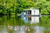 Enten und Hausboot auf der Havel, Brandenburg an der Havel, Brandenburg, Deutschland