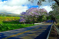 Springtime in Upcountry Maui