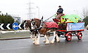 ::  HELIX PROJECT ::  A HORSE AND DRAY TAKE GUEST TO  THE START OF THE £43 MILLION LAND TRANSFORMATION PROJECT ::.