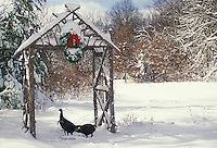 Turkeys under arbor christmas