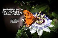"""A black and orange butterfly, perched on an exotic looking flower, with text regarding  chaos theory.  """"Predictability: Does the Flap of a Butterfly's Wings in Brazil Set Off a Tornado in Texas?""""  1972 paper presented by MIT meteorologist Edward Lorenz, father of chaos theory."""
