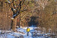 Frau wandert im Schnee unter Eichen, Wildpark Potsdam, Brandenburg, Deutschland