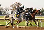 Tacitus, trained by trainer William I. Mott, exercises in preparation for the Breeders' Cup Classic and Channel Maker, trained by trainer William I. Mott, exercises in preparation for the Breeders' Cup Turf at Keeneland Racetrack in Lexington, Kentucky on November 1, 2020. /CSM