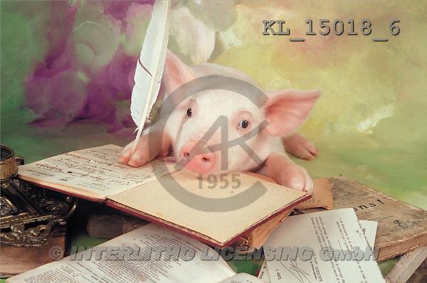 Interlitho, Alberto, ANIMALS, pigs, photos, pig reading(KL15018/6,#A#) Schweine, cerdos