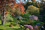 Springtime in the Asticou Azalea Garden, Northeast Harbor, ME, USA