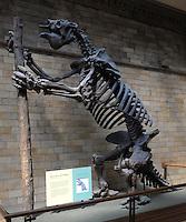 LONDRES-UK-25-05-2013. Fósil de Megaterium en el Museo de Historia Natural, Londes. Megatherium americanum Skeleton in the Natural History Museum, London. Photo: VizzorImage