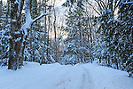 A Fresh Blanket of Snow Decorates the Forest at Dusk on a Winter Day in the Monadnock Region of New Hampshire