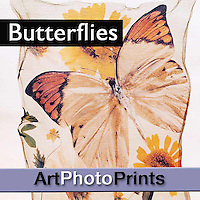 Butterfly & Insect Photo Art Wall Prints