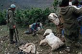 Isikveren, Turkey.April 12, 1991..A Kurdish refugees loaded with relief supplies mounts a steep incline to the mountain refugee camp that was home to an estimated 300,000 refugees after they fled Saddam Hussein's post Gulf war persecution. A Turkish soldier aggresses him and beats with with a stick...In the wake of the 1991 Persian Gulf War rebellions in Southern and Northern Iraq occurred. The uprising in the Kurdish areas of Northern Iraq broke out in March, sparked by demoralized Iraqi Army troops returning from it's defeat against United States lead coalition forces in southern Iraq and Kuwait. Although they presented a threat to Iraqi President Saddam Hussein?s regime, his Iraqi Republican Guard suppressed the rebellion with massive force, as the expected US intervention never materialized. ..The faltering rebellion fueled a terrified mass exodus. The U.N. High Commissioner for Refugees called it the largest in its 40?year history. During March and early April, nearly two million of Iraqis escaped from strife-torn cities to the mountains along the northern borders and into Turkey and Iran. Their exodus was sudden and chaotic, with thousands fleeing on foot, on donkeys, or crammed onto open-backed trucks and tractors. Thousands, many of them children, died or suffered injury along the way, primarily from adverse weather, unhygienic conditions and insufficient food and medical care. Some were killed by army helicopters, which deliberately strafed columns of fleeing civilians. Others were injured when they stepped on land mines planted by Iraqi troops near the Iran border during the war. Greenpeace has estimated that at one point in 1991, an estimated 2,000 Kurds were dying every day..