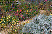 Dirt path through California native plant wildflower meadow with Artemesia, clarkia, and tidytips in pollinator garden at Los Angeles Natural History Museum