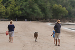 Cassowary/cassowaries (Casuarius casuarius johnsonii) passing through tourists, families, playing kids walking through a camp site by the beach.