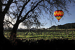 A hot air balloon sails over a vineyard in Napa Valley California.