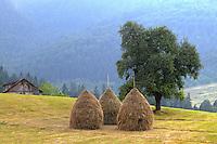 Mown meadows.  Tara National Park, Serbia.