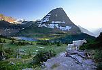 Mountain goats, Glacier National Park, Montana