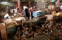 Wild Animal Market China
