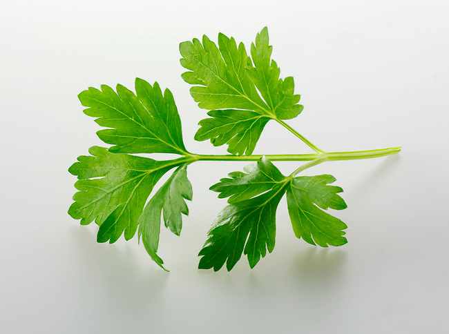 Flat leaved Parsley leaves