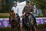 October 28, 2014: Emollient exercises in preparation for the Breeders' Cup Filly & Mare Turf at Santa Anita Park in Arcadia, California on October 28, 2014. Zoe Metz/ESW/CSM