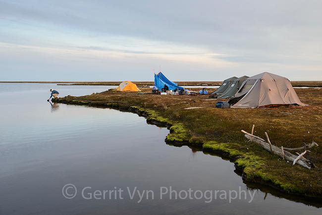 Field camp at Wishbone Lake on the Yukon Delta. Yukon Delta National Wildlife Refuge, Alaska. June.