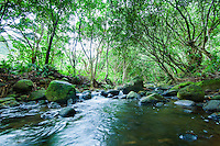 Mossy rocks frame a low-angle view of towering trees above a stream on Kaua'i.