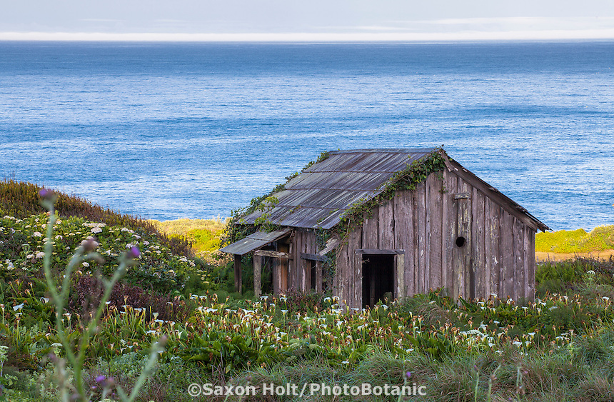 Old weathered shed by ocean on coastal bluff at Bihler Point, The Sea Ranch