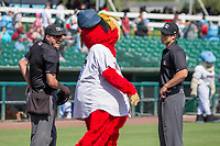 Inland Empire 66er's mascot Bernie gives instructions to home plate umpire Mike Rains and base umpire Zach Neff prior to the game at San Manuel Stadium on April 11, 2018 in San Bernardino, California. (Donn Parris/Four Seam Images)