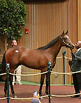 September 08, 2014:Hip #68 War Front - Meridiana colt consigned by Gainesway RNA'd at $1,950,000  at the Keeneland September Yearling Sale.  Candice Chavez/ESW/CSM