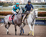 HALLANDALE BEACH, FL - JAN 20:X Y Jet #1 with Emisael Jaramillo in the irons for trainer Jorge Navarro prepares to run and win the $100,000 Sunshine Millions Sprint Stakes at Gulfstream Park on January 20, 2018 in Hallandale Beach, Florida. (Photo by Bob Aaron/Eclipse Sportswire/Getty Images)