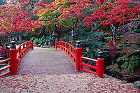 Orange JAPANESE FOOT BRIDGE is surrounded by MAPLE TREES on the island of MIYA JIMA off the coast of HIROSHIMA