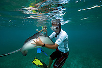 Snorkeller holding a southern stingray in his arms