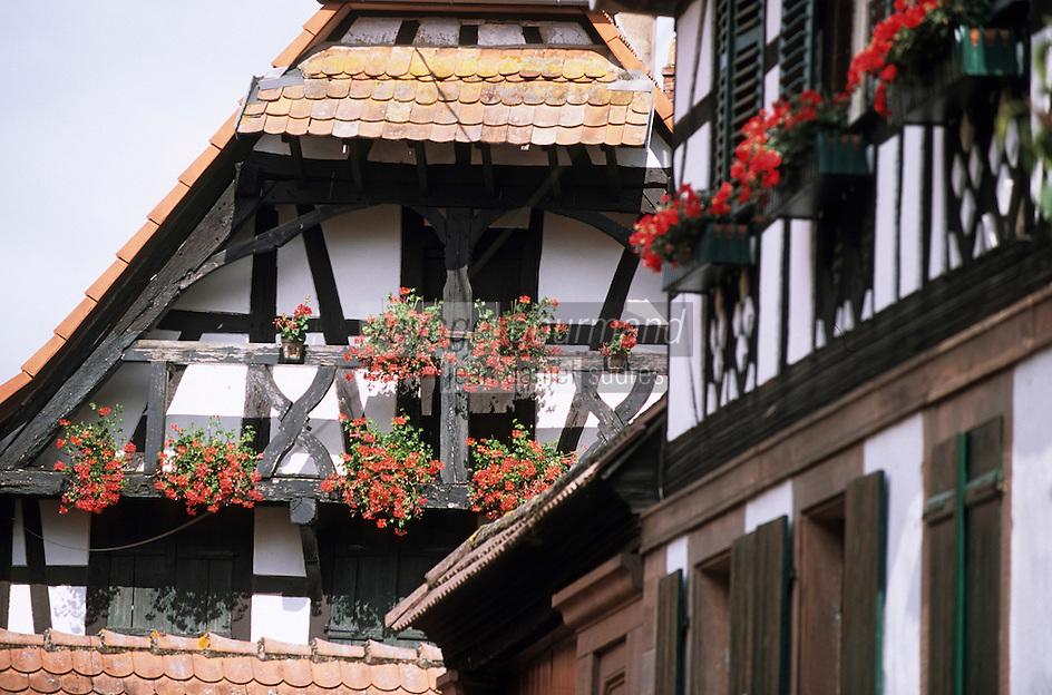 Europe/France/Alsace/67/Bas-Rhin/Zutzendorf: Détail habitat