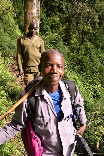 Porters generally carry gorilla trekkers heavy packs in Bwindi -- trekkers carry enough water and food to sustain a full day of hiking.  Sometimes groups discover the gorillas early, sometimes, the trek to find them is long and arduous.
