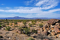 The Colorado Desert in Joshua Tree National Park, California.