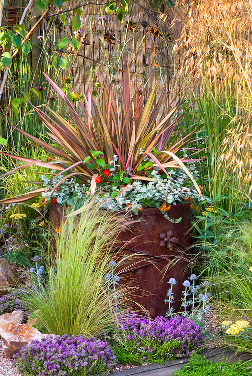 Container garden of foliage spiky leaved multi-colored specimen Phormium in wonderful rusted antique old iron pot with Helichrysum petiolare licorice plant and Lantana, with in ground garden plantings of thymes herbs Thymus, Achillea yarrow, Eryngium, and sunlight streaming thru ornamental grass, lots of mixed textures, colors, types and varying heights of plants for lots of interest